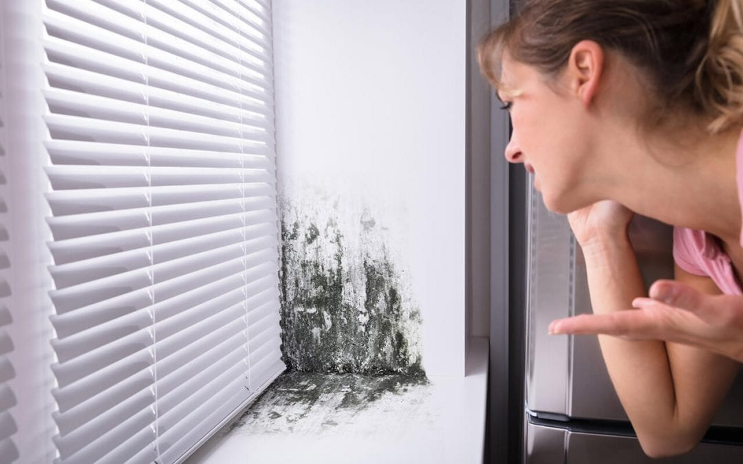 4 Warning Signs of Mold in the Home